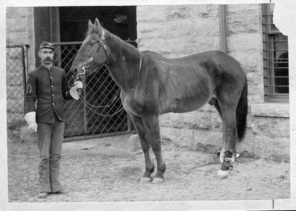 Конь команч