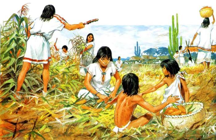 maya kukuruza