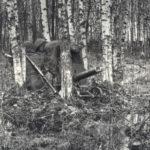 советские солдаты в лесу