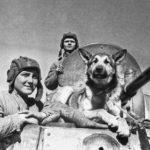 Служебная собака сидит на танке ВОВ