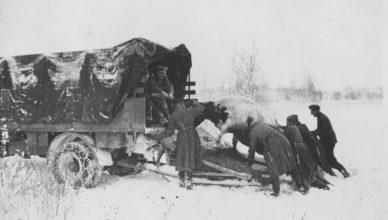 Немцы забирают скот