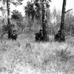 партизаны в лесу