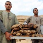 Десятки кошачьих мумий и статуй нашли археологи возле древней пирамиды