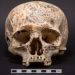 Черепа 2000 летнего возраста рассказали ученым о том, как древние кельты праздновали победу