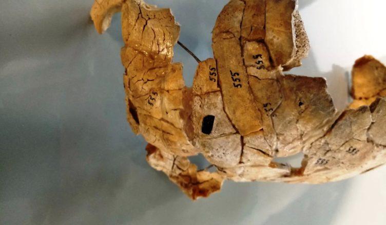 Мужчина погибший 8000 лет назад не был жертвой каннибализма