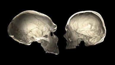 Форма головы может рассказать о том, несет ли человек в себе ДНК неандертальца