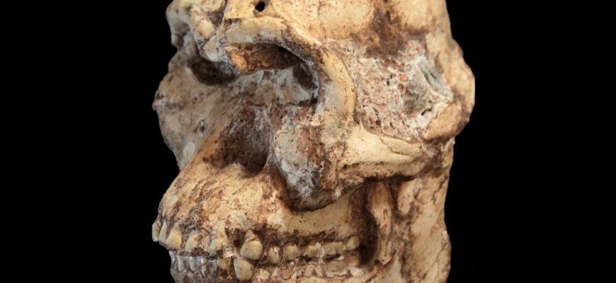 При раскопках нашли таинственного предка человека