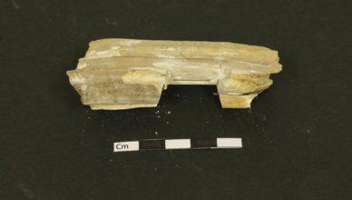Останки, обнаруженные в могилах древних викингов доказывают, что они ездили верхом