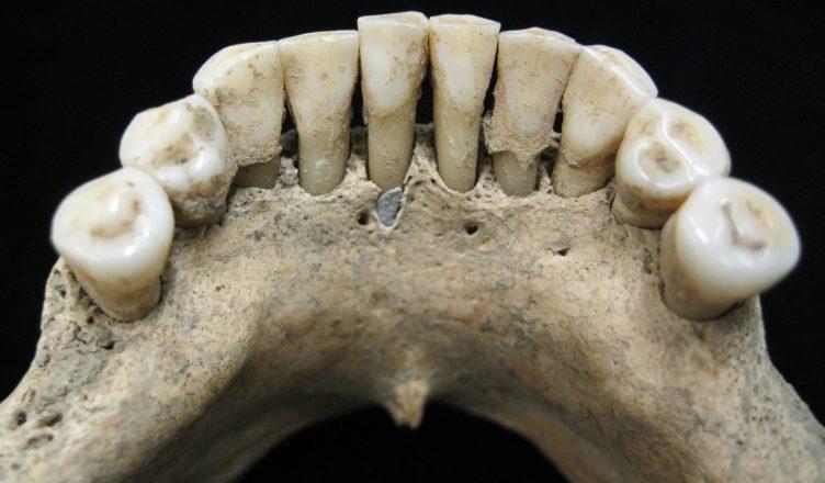 По зубам этой женщины ученые узнали, что она могла работать иллюстратором