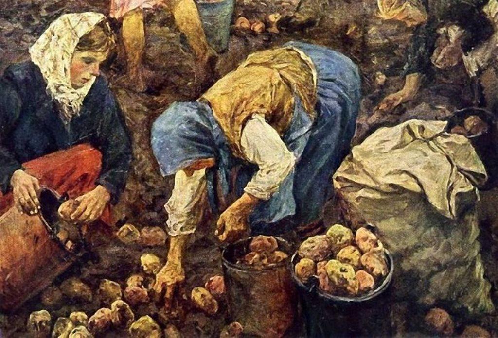 Как картошка стала проще пареной репы?
