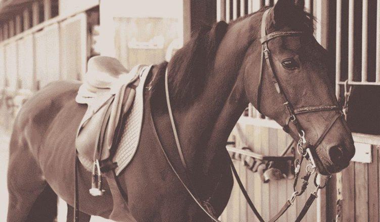 езда верхом на лошади