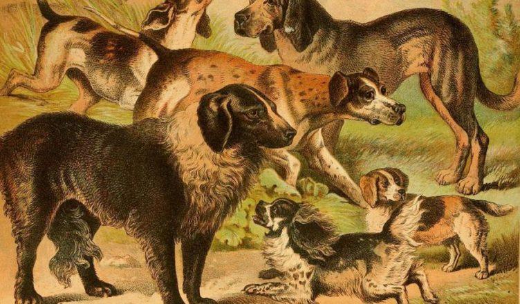 Кто первый приручил собак
