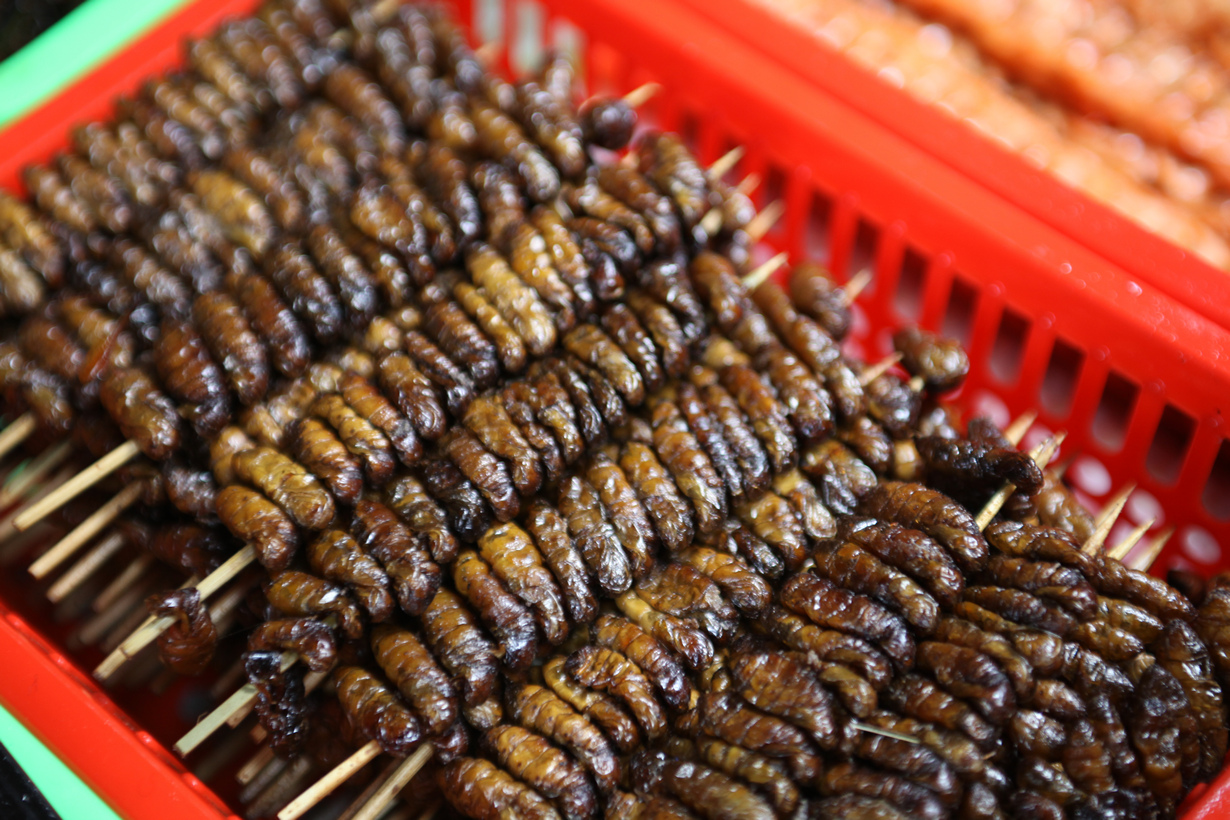 Личинки шелкопряда