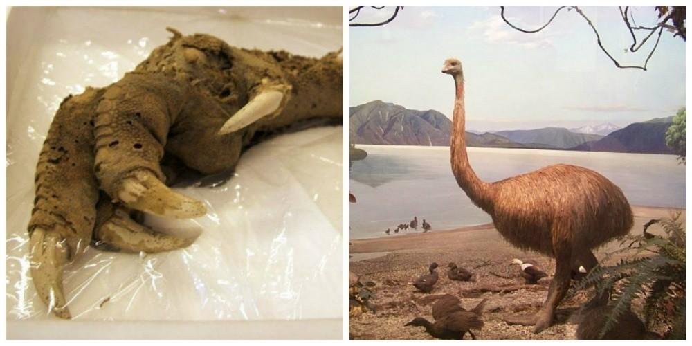 горы Оуэн археологи обнаружили большой коготь