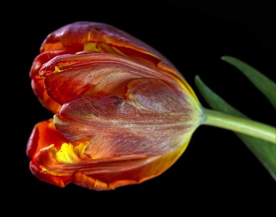 Браслет Parrot Tulip