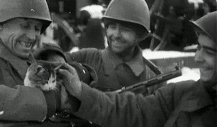Одичалая кошка блокадного Ленинграда