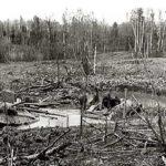Из блокадного кольца на Синявинские болота