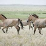 Как изменялась популяция лошадей в мире