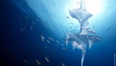 Впечатляющие морские открытия XXI века