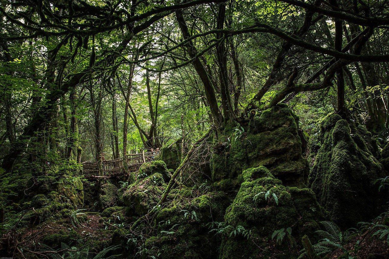 кричащий лес деринга