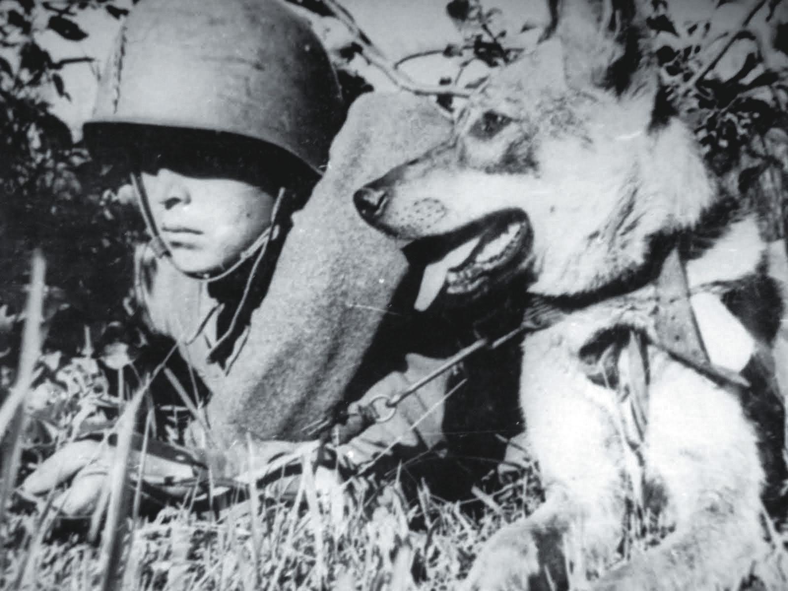 разведчики с собакой вов