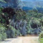 Марши смерти в джунглях Борнео