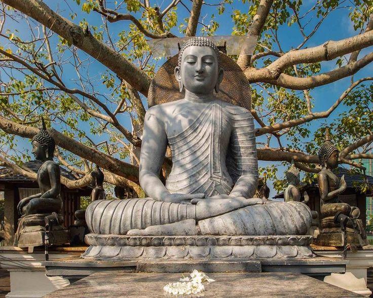 Священное дерево Будды