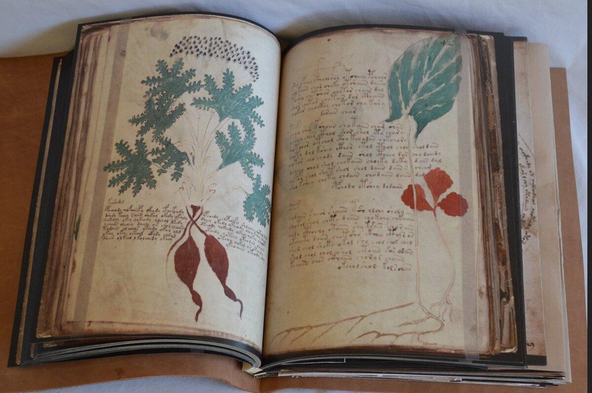 Загадочная рукопись Войнича