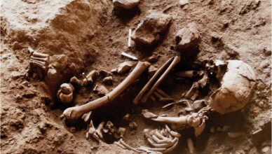 Захоронения неандертальцев и ранних людей