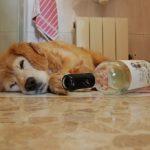 забавных историй с участием пьяных животных