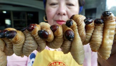самых противных блюд, которые едят китайцы