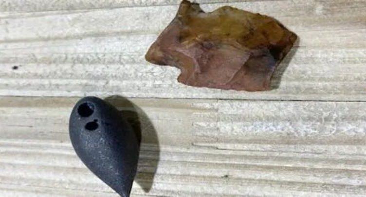 В желудке огромного аллигатора были обнаружены древние артефакты