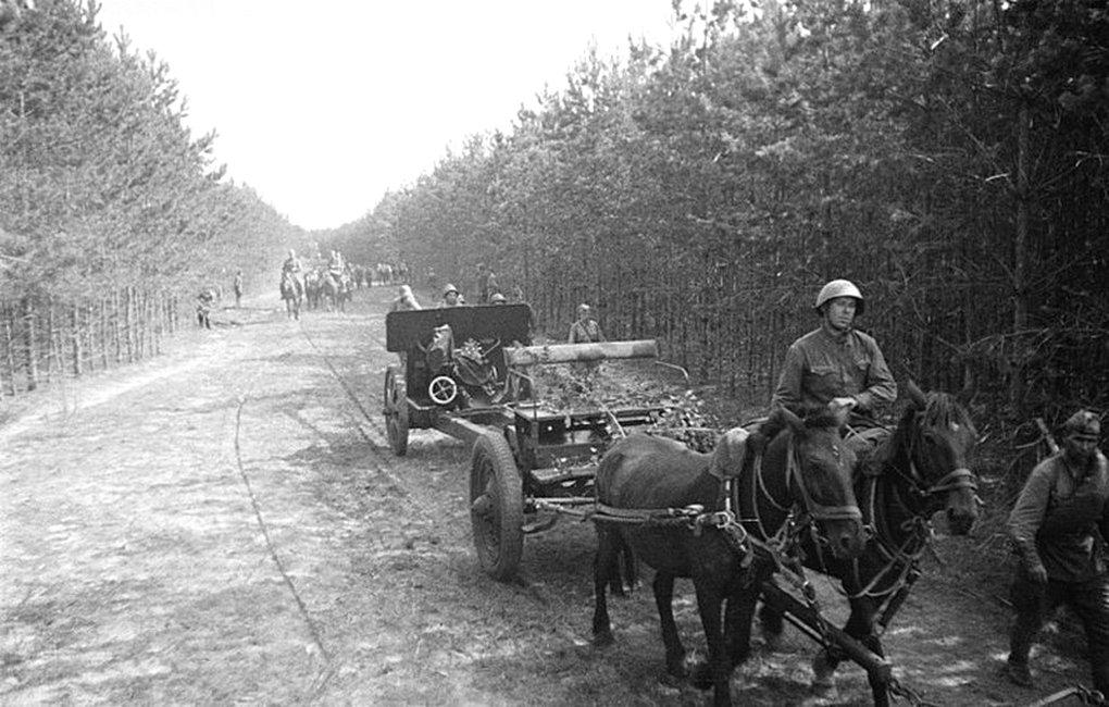 Лошади в артиллерийских упряжках